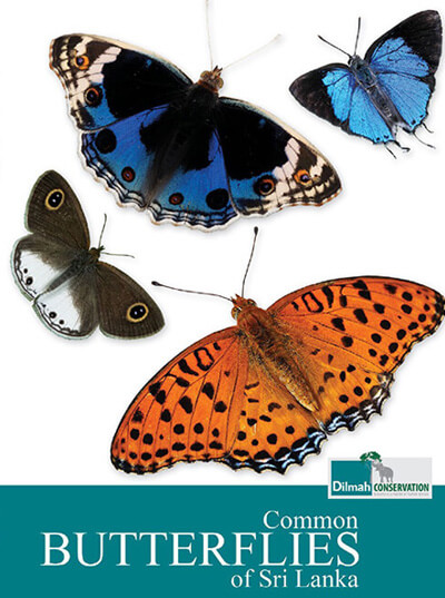 Common Butterflies of Sri Lanka